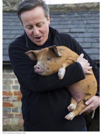 PIG GATE